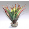 Sydeco Aloes, 16 cm