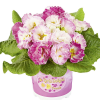 Rosen-Primel ´Girl´s Delight Rose Shades´