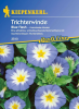 Trichterwinde Blue Flash